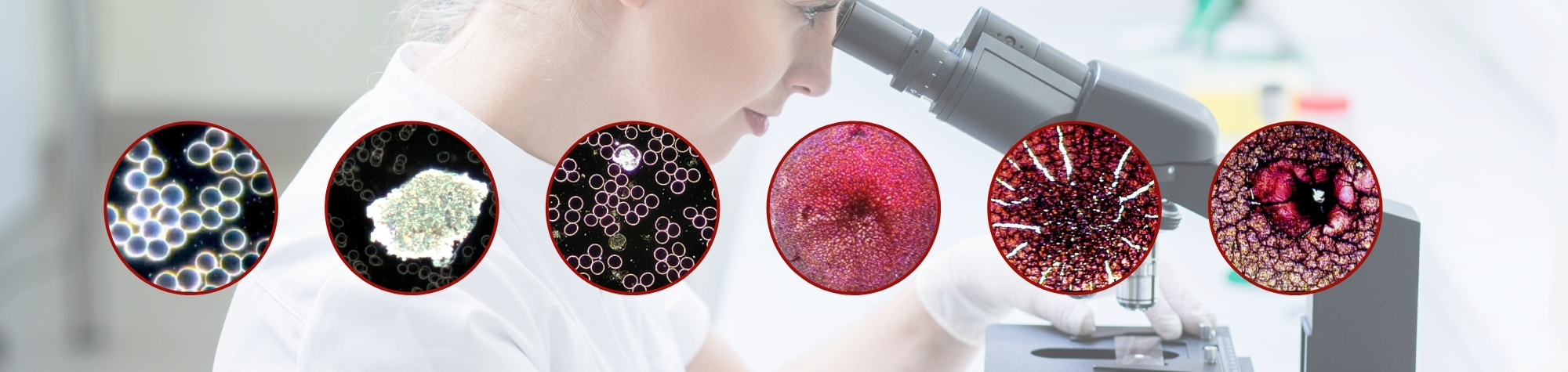 Live Cell Microscopy Course | Online Nutrition Training Course & Diplomas | Edison Institute of Nutrition